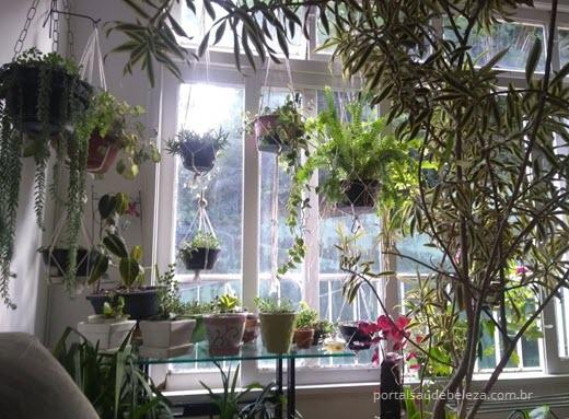 Plantas dentro de casa fazem bem à saúde
