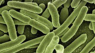 Bactéria Escherichia Coli doença desingfetar patógeno