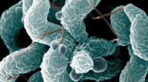 Campylobacter, quais sintomas e tratamento para a infecção?